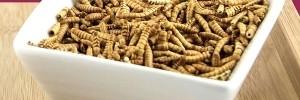 insectes, les nouveaux biscuits apéritif